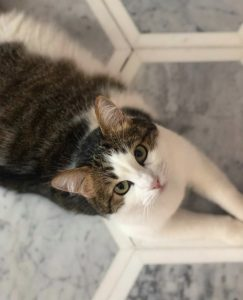 Adorable cat laying on top of marble kitchen floor tiles