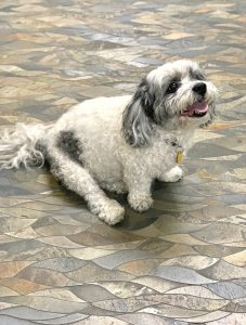Kitchen Floor Tile With Puppy